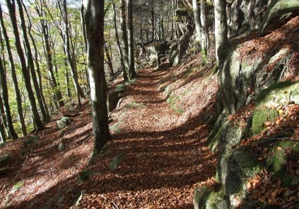 Beech Woods in Dunnerdale
